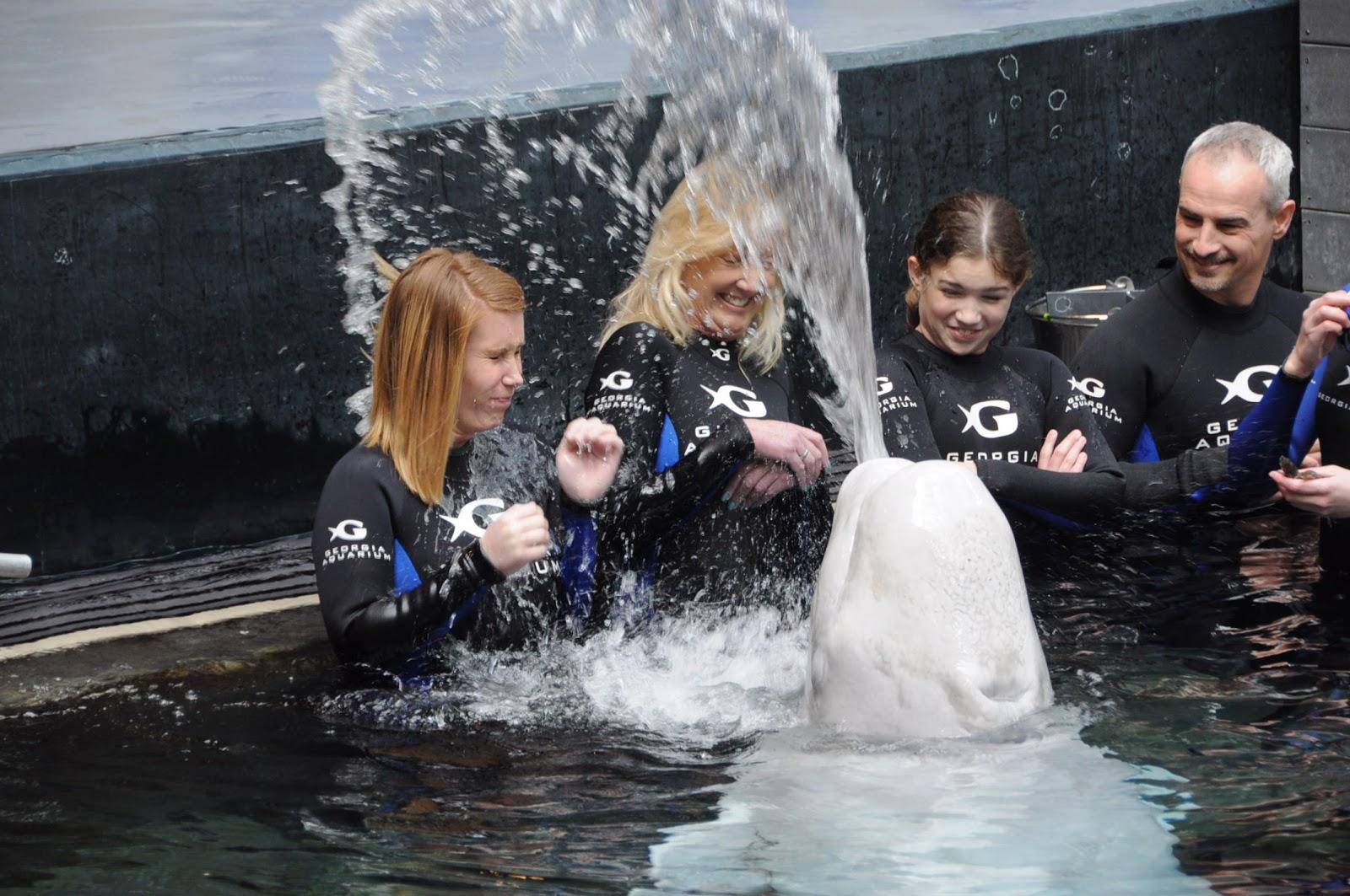 Georgia Aquarium Internship April 2013