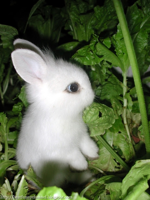Cute small bunny.