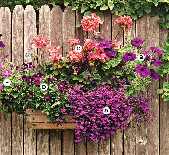 New home interior design great container gardens - Container gardens for sun ...
