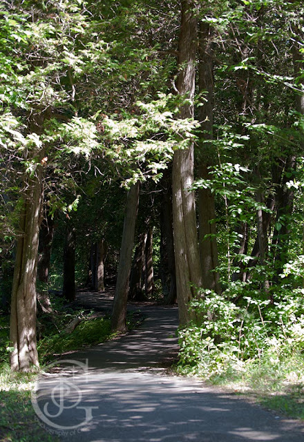 a forested pathway at Bass Lake Provincial Park near Orillia