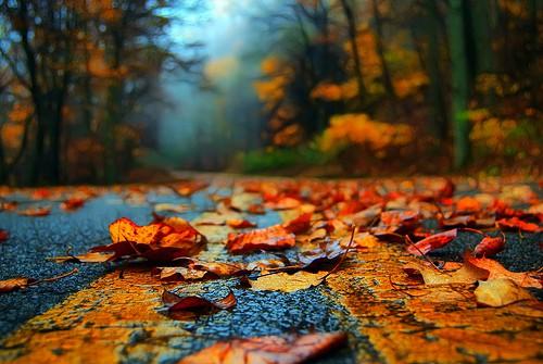 عکس+جاده+ی+پاییزی