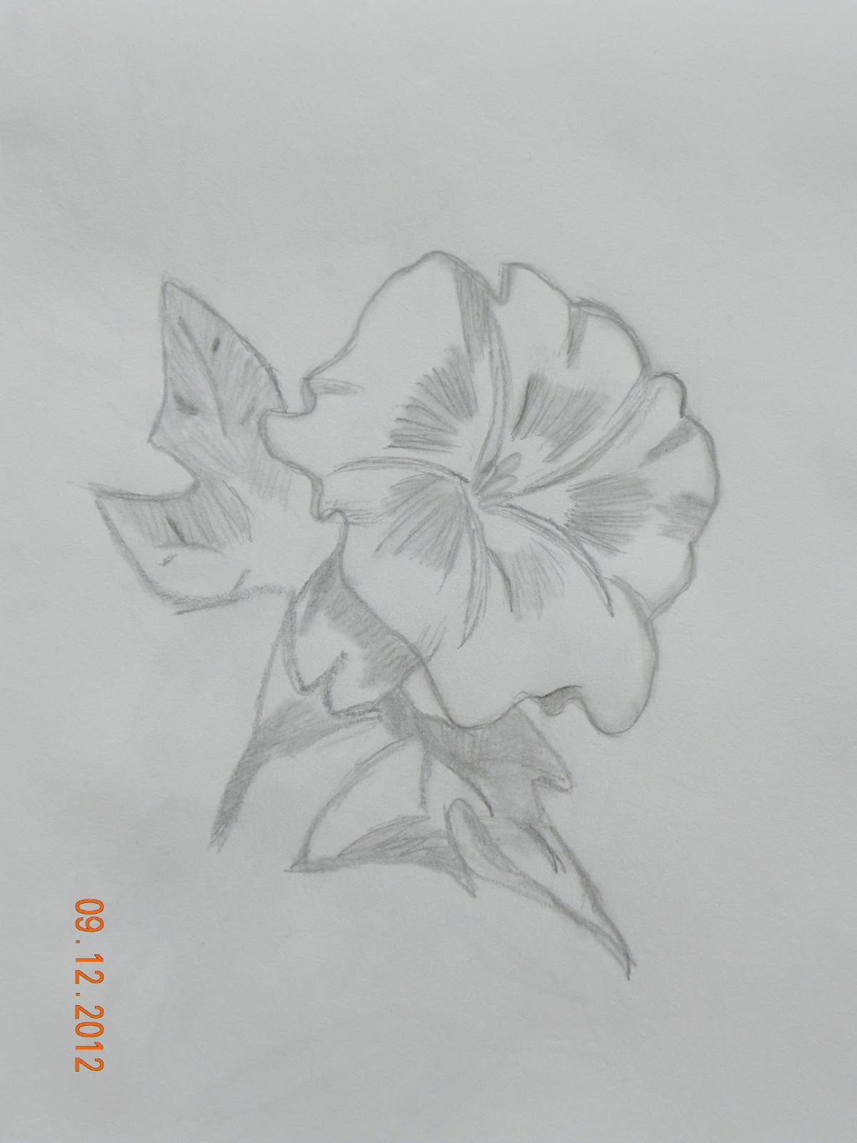 Art: Pencil Drawings - Flowers