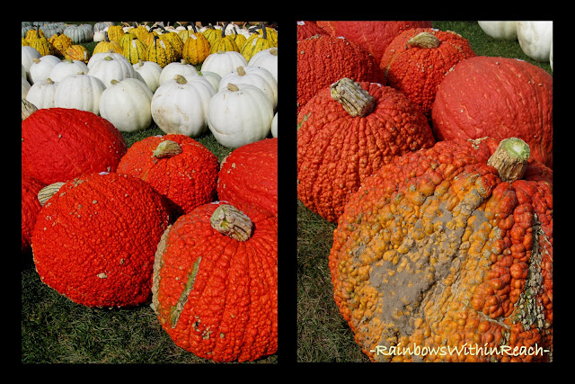 photo of: Pumpkin Variations from RainbowsWithinReach