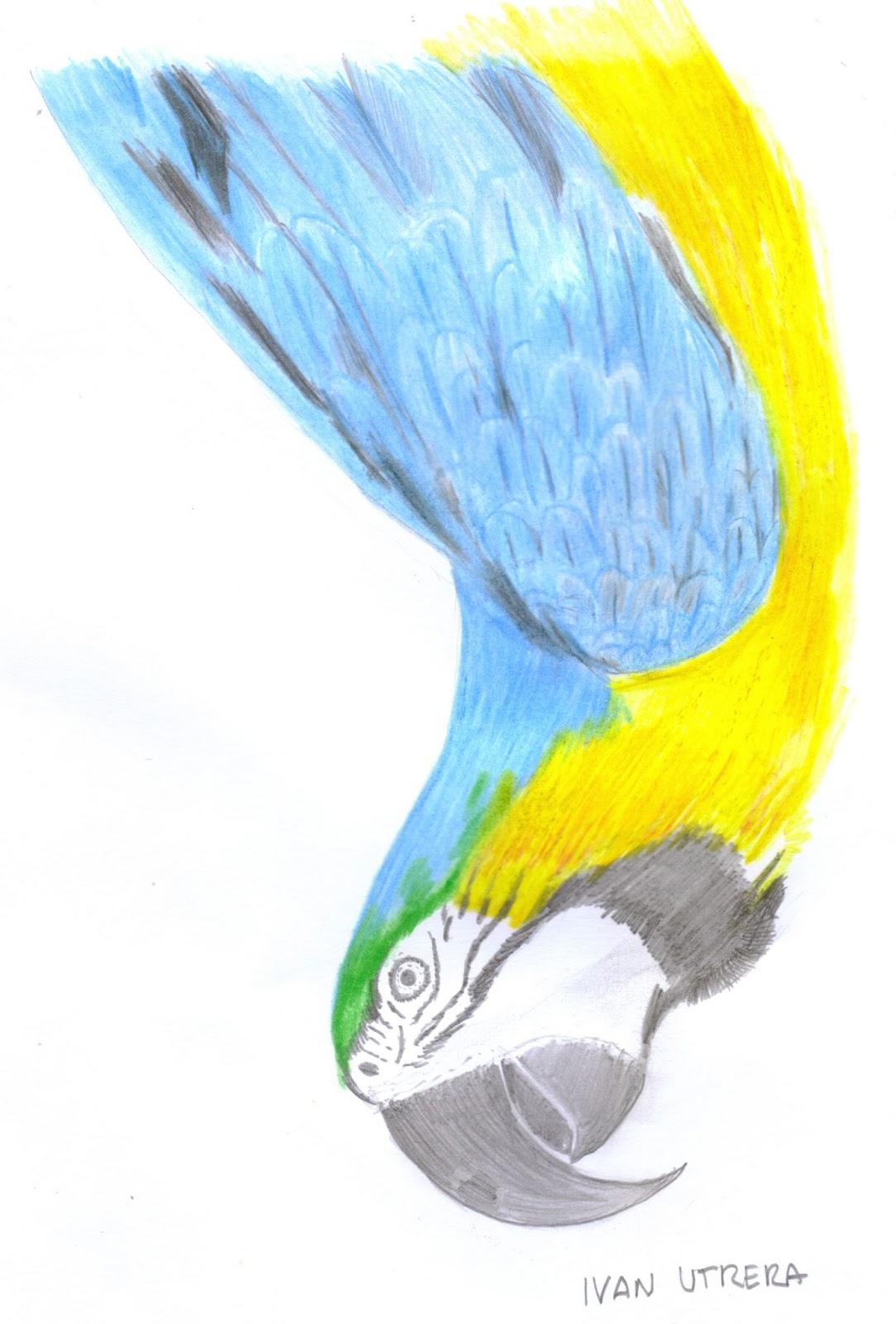 en lapices de colores   Dibujo a lápiz, Reciclaje, Tallado en