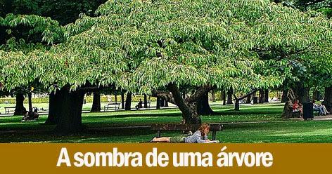 A Sombra de uma árvore