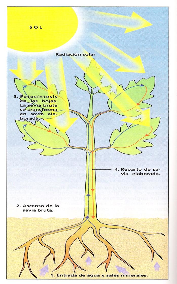 Como se alimentan las plantas y animales for Como se llaman las plantas ornamentales