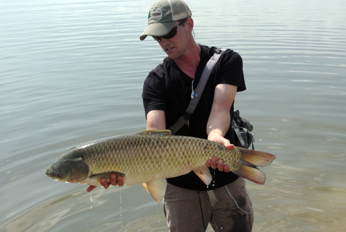 Currents grass carp on hoppers for Can you eat carp fish
