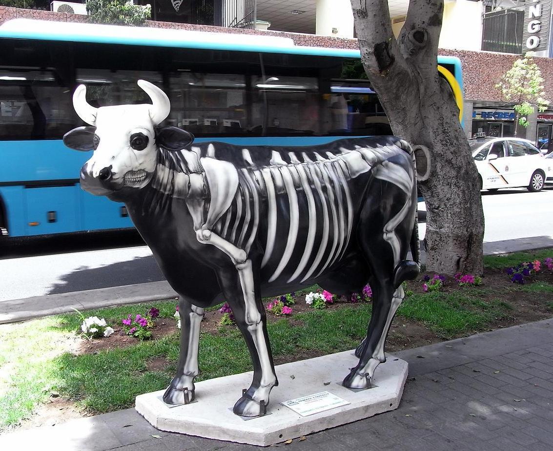 Vacas flacas dicen... ¡esqueléticas!