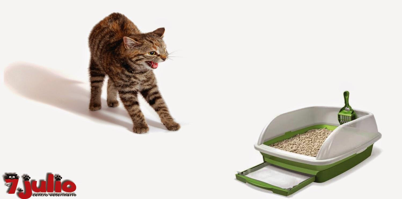 Mi gato se orina o se defeca fuera del arenero