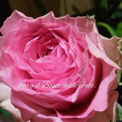 IL BOSCO DELLE FATE: Il colore rosa significato e proprietà!