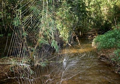 10 Laba-laba Mengerikan Yang Baru Saja Ditemukan