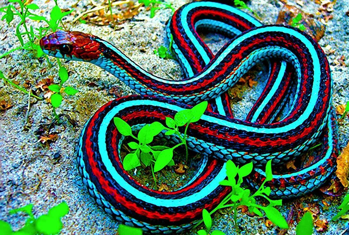 download wallpapers free powerful snakes wallpaper