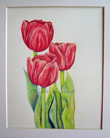 Learn Colored Pencils with these beautiful Tulips