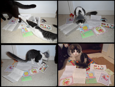 Anakin the two legged cat, cards & letters