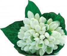 Profitati de puterea tamaduitoare a florilor de mai