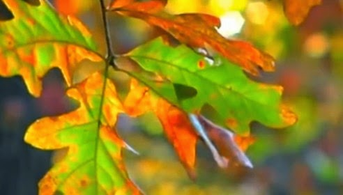 Why leaves change colors - youtube