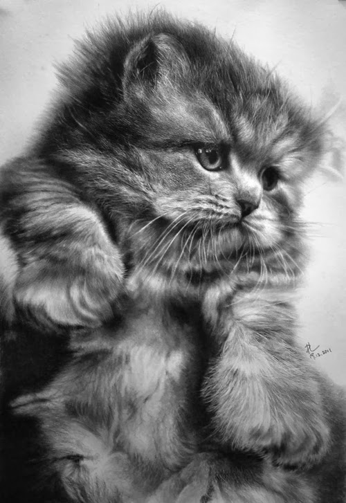 14-Hyper-realistic-Cats-Pencil-Drawings-Hong-Kong-Artist-Paul-Lung-aka-paullung-www-designstack-co