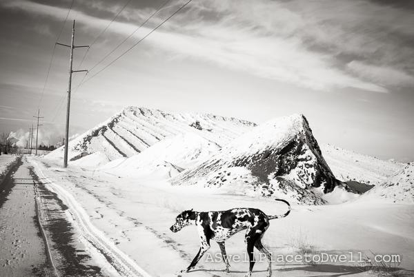 Dief & the snow pile