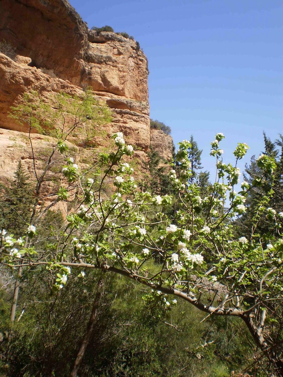 Jardineria eladio nonay primavera en el campo jardiner a - Jardineria eladio nonay ...