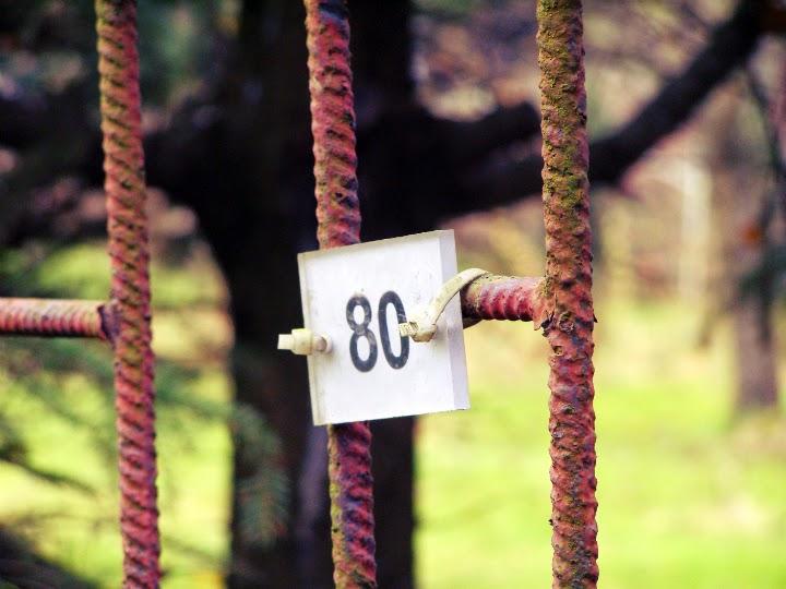 numer 80