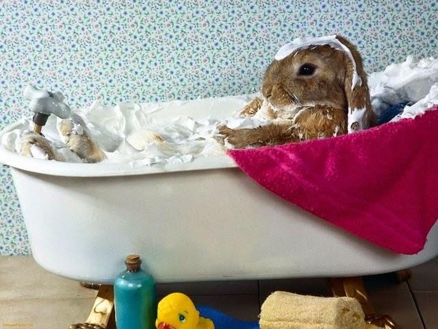 mag je konijnen wassen
