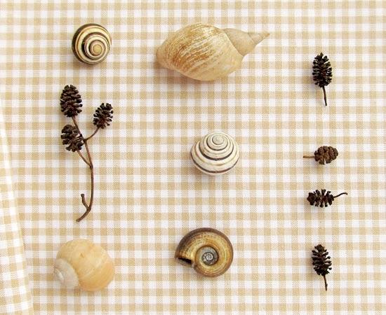 фото, shells