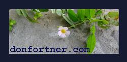 Don Fortner