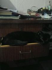 Черный кот лежащий на столе