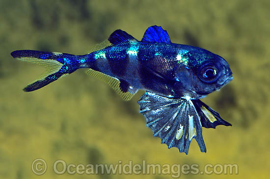 Funny pictures gallery types of fish freshwater fish for Types of aquarium fish