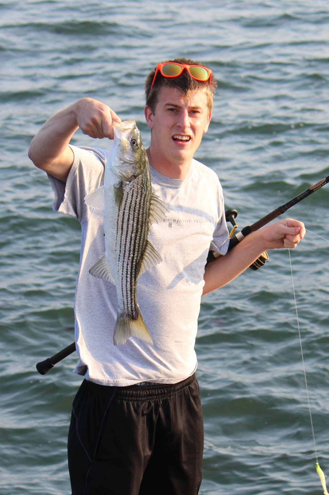 Rhode island striped bass find the bait and you 39 ll find for Striper fish bait