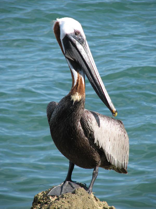 Bonao internacional galeria de imagenes todo lo que - Fotos de pelicanos ...