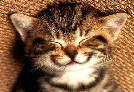Cười không chỉ giúp bạn hưng phấn, khỏe mạnh mà còn giúp bạn chống bệnh tật, bảo vệ sức khỏe
