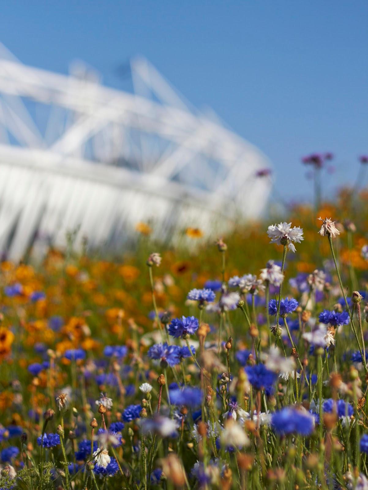 London 2012 Olympic Games Park flowers Stadium