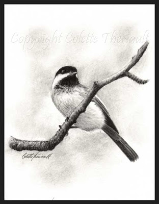 Black Capped Chickadee charcoal drawing in pencil by Wildlife Artist Colette Theriault