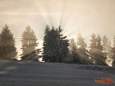 Efectele de luminii dupa un copac