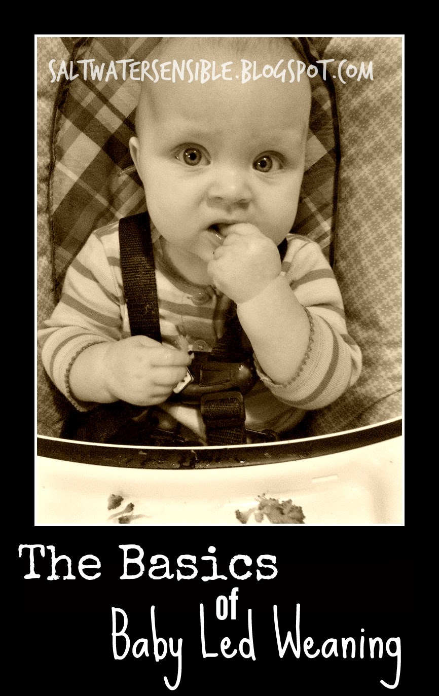 The Basics of Baby Led Weaning