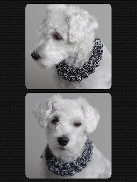 foto colar cachorro