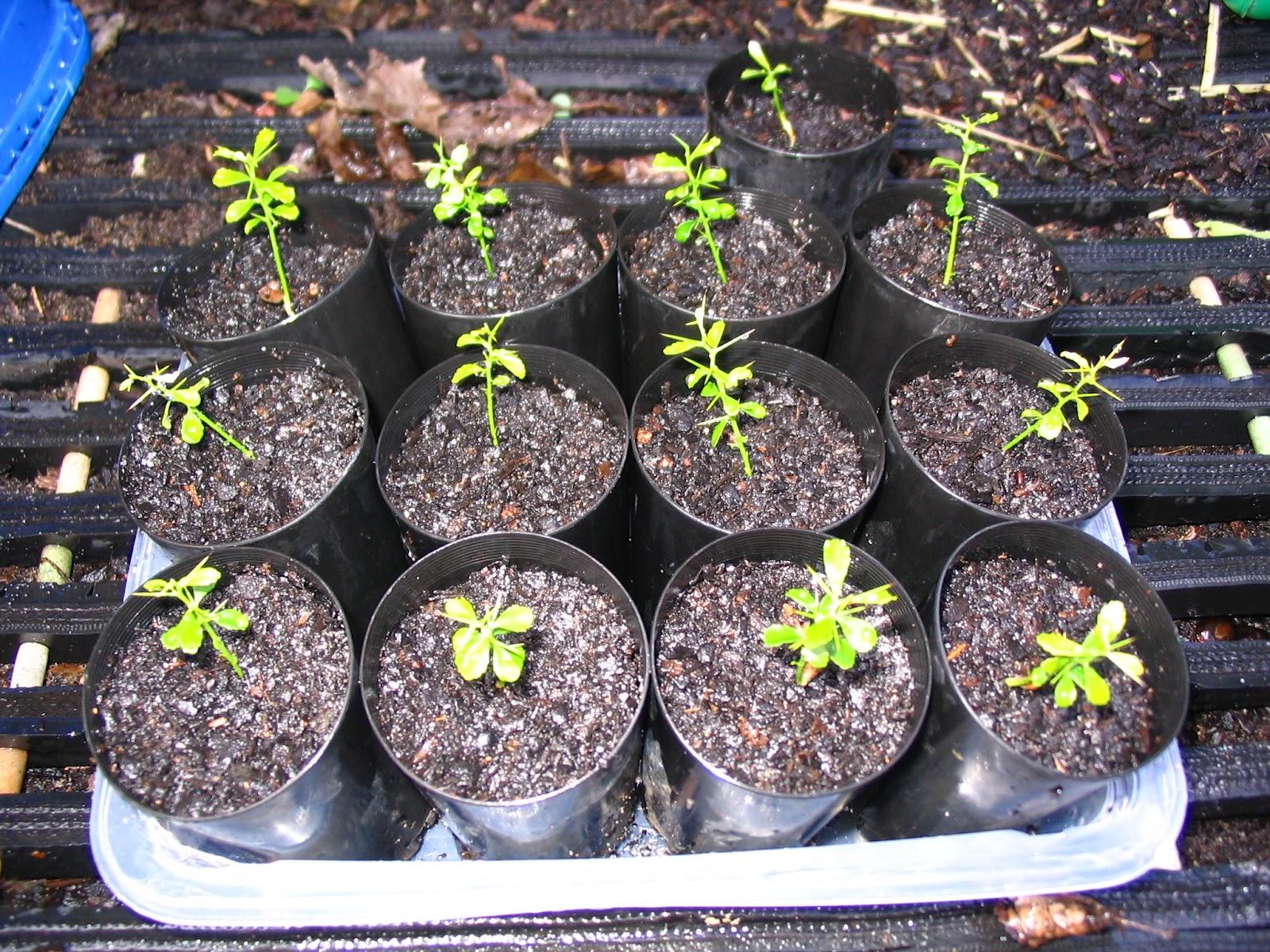 how to break up soil when planting seedlings