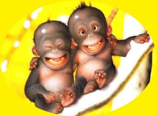 Cinta Monyet Versus Cinta Gorilla