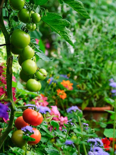 Making fruit and vegetable garden in the backyard for Fruit and vegetable garden design