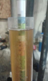 Lambic barrel gravity reading at Day 60
