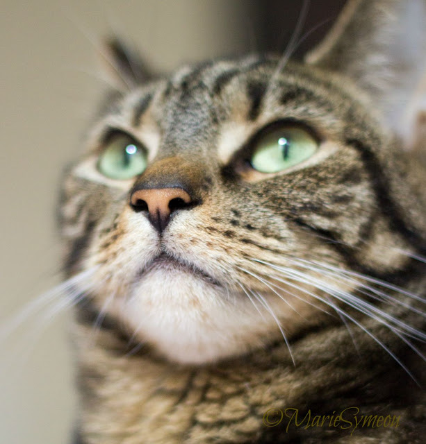 close up of whiskers