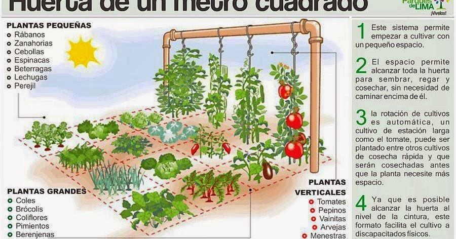 Mi huerto ecol gico donde ubicar mi huerto ecol gico Rotaciones de cultivos ecologicos