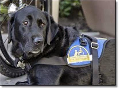 Federal Crime Fake Service Dog Laws