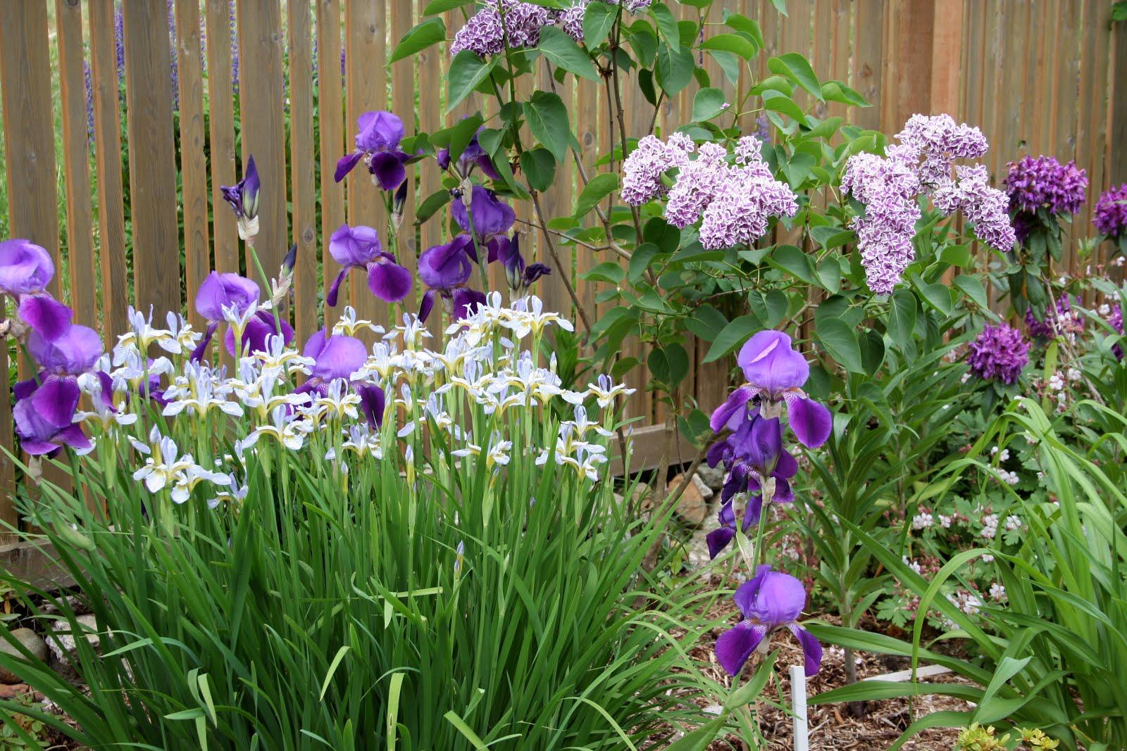 Myrna's garden