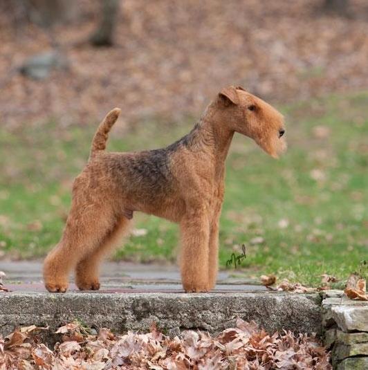 DOG SHOW POOP: 2012-07...