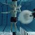 Homem atira em si mesmo com uma arma debaixo d'água em nome da ciência... Você não vai acreditar no que acontece a seguir