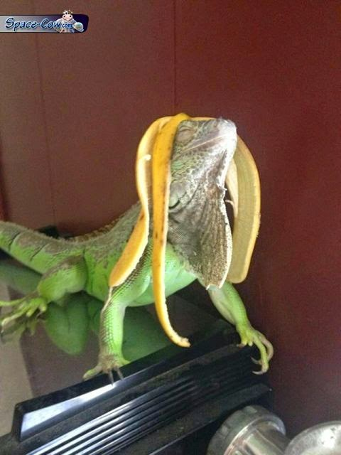 funny lizard banana wig