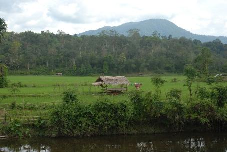 RAPP hambat inisiatif masyarakat kelola hutan desa