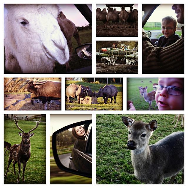 animals, wmsp
